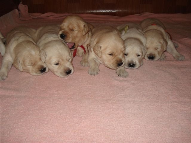 Joy Puppies